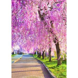 絵画風 壁紙ポスター  -地球の撮り方- しなだれるピンクのシャンデリア、喜多方市の日中線記念自転車歩行者道のしだれ桜 C-ZJP-080A1 (A1版 585mm×830mm)|real-inter