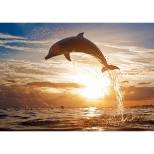 絵画風 壁紙ポスター  イルカ 夕陽 ジャンプ ドルフィン サンセット 海 キャラクロ DLP-004A2 (A2版 594mm×420mm)|real-inter