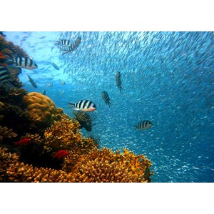 絵画風 壁紙ポスター  ダイビング サンゴ礁 スキューバ ダイバー 深海 海 キャラクロ DVG-006A1 (A1版 830mm×585mm) real-inter