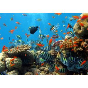 絵画風 壁紙ポスター  ダイビング サンゴ礁 熱帯魚 深海 海 キャラクロ DVG-007A2 (A2版 594mm×420mm) real-inter