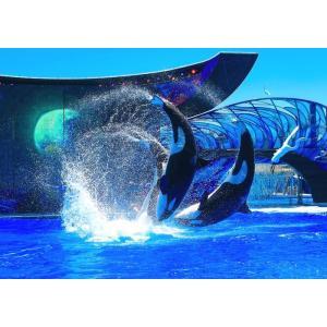 絵画風 壁紙ポスター  シャチ オルカ ジャンプの競演 オーランドSea World グランパス K...