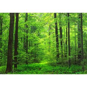 絵画風 壁紙ポスター  森林 森林浴 緑 目の保養 気分転換 癒し キャラクロ SNR-001A2 (A2版 594mm×420mm)|real-inter