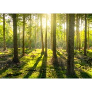 絵画風 壁紙ポスター 森林 森林浴 緑 木漏れ日 目の保養 気分転換 癒し  キャラクロ SNR-003A1 (A1版 830mm×585mm)|real-inter