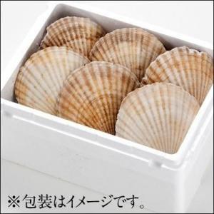 ホタテ ほたて 帆立 北海道産 活ホタテ 2kg 指定日可能 お取り寄せ グルメ ランキング 活きたまま発送するから鮮度が違う 内祝 (特産品 名物商品)|rebun|10
