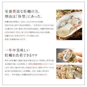 生牡蠣 牡蠣 カキ かき 生食可 殻付きLサイズ 8個 北海道 厚岸産 指定日可能 鍋 送料無料 ギフト プレゼント用 内祝|rebun|05