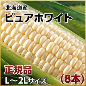 (ピュアホワイト とうもろこし)北海道産 ピュアホワイト 8本 L〜2Lサイズ ギフト プレゼント用 北海道 2019 内祝|rebun