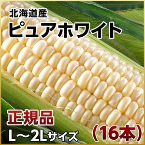 (とうもろこし トウモロコシ コーン)北海道産 ピュアホワイト 16本 L〜2Lサイズ ギフト プレゼント用 北海道 2019 内祝い rebun