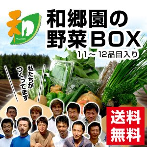 和郷園 野菜ボックス11品目〜12品目 野菜セット 野菜BOX 産地直送 農家厳選|recommendo