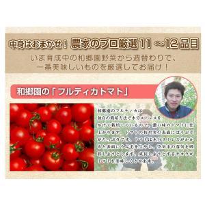 和郷園 野菜ボックス11品目〜12品目 野菜セット 野菜BOX 産地直送 農家厳選|recommendo|02