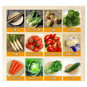 和郷園 野菜ボックス11品目〜12品目 野菜セット 野菜BOX 産地直送 農家厳選|recommendo|04