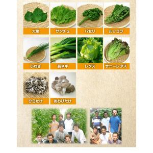 和郷園 野菜ボックス11品目〜12品目 野菜セット 野菜BOX 産地直送 農家厳選|recommendo|05