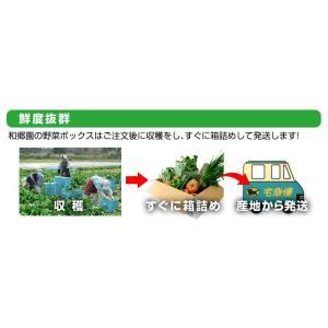 和郷園 野菜ボックス11品目〜12品目 野菜セット 野菜BOX 産地直送 農家厳選|recommendo|06