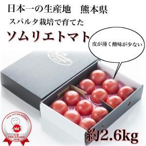 トマト 送料無料 九州 熊本産  ソムリエトマト 2.6kgもぎたてを順次発送 6月20日まで|redup