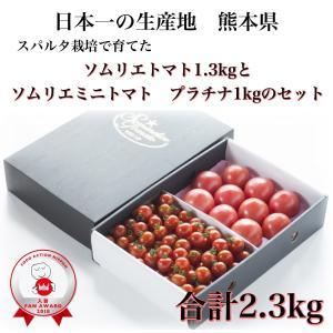 送料無料 九州 熊本産 くまモン ソムリエトマト 1.5kg もぎたてを順次発送 6月20日まで|redup