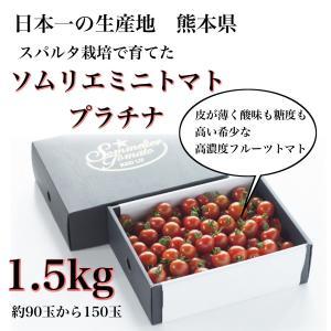 ソムリエミニトマト 1.6kg(100玉前後) 送料無料 九州 熊本産 くまモン もぎたてを順次発送 6月20日まで|redup