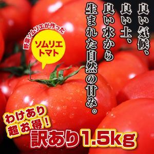 九州 熊本産 ソムリエトマト 訳あり 1.5kg 買えば買うほど どんどんお得に!|redup