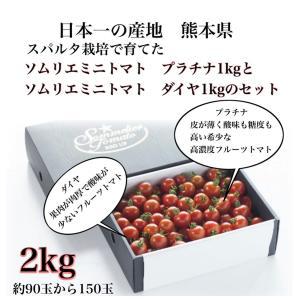 ソムリエミニトマト 1kg(60玉前後) 送料無料 九州 熊本産   もぎたてを順次発送 6月20日まで|redup
