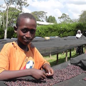 コーヒー豆 送料無料 エチオピア 250g まとめ割 イルガチェフ G1 ナチュラル モカ ハイロースト セラム 珈琲豆 rencacoffee