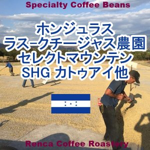 コーヒー豆 送料無料 ホンジュラス 100g ラス-クチージャス農園 セレクトマウンテン シティロースト 珈琲豆 ポイント消化|rencacoffee
