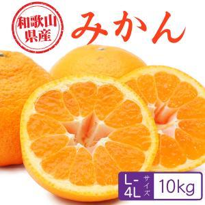 みかん 和歌山県産 10kg 秀・優・並ランク L~4Lサイズ