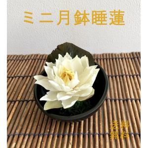 【送料無料】睡蓮のアイスフラワー【スイレン・すいれん】【アジアン・バリ風・お供え・お盆・供養・法事・法要】|richild