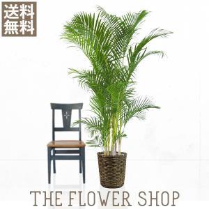 観葉植物 おしゃれ アレカヤシ 高さ:約150〜170cm 籐カゴ|ricochet-petit