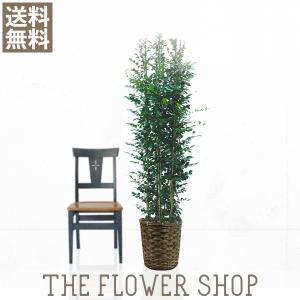 観葉植物 おしゃれ シルクジャスミン 高さ:約150〜170cm 籐カゴ|ricochet-petit