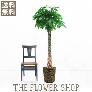 観葉植物 おしゃれ パキラ 高さ:約150〜170cm 籐カゴ|ricochet-petit