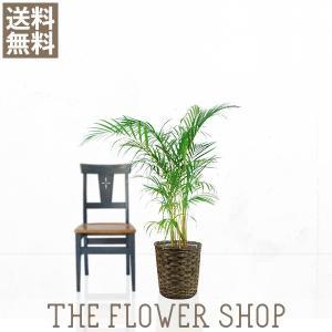 観葉植物 おしゃれ アレカヤシ 高さ:約90〜110cm 籐カゴ|ricochet-petit