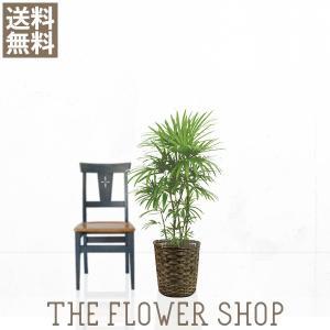 観葉植物 おしゃれ シュロチク 高さ:約90〜110cm 籐カゴ|ricochet-petit