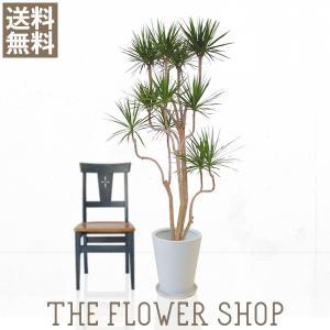 観葉植物 おしゃれ コンシンネ 高さ:約150〜170cm 陶器鉢|ricochet-petit