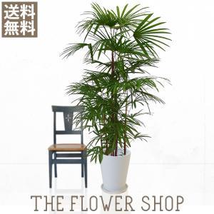 観葉植物 おしゃれ シュロチク 高さ:約150〜170cm 陶器鉢|ricochet-petit