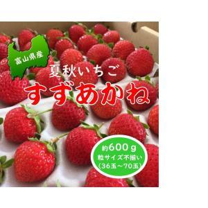 夏秋いちご「すずあかね」は果肉の締まりが良く真っ赤な光沢のあるいちごです。  甘いだけではなく酸味も...