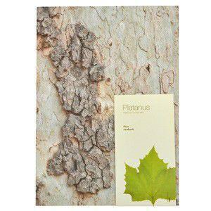 WOODPECKER NOTE  Platanus M|rocca-clann