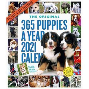 365 Puppies-a-Year 2021 Calendar rokufi
