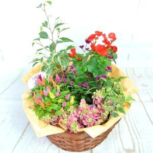 寄せ鉢 季節の寄せ鉢 寄せ植え 寄せかご ギフト お祝 プレゼント 直径27cm 送料無料 rose-factory
