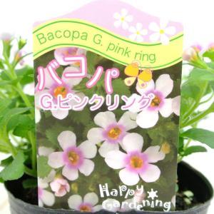 バコパ コピア グレートピンクリング 3号ポット 栄養系バコパ 寒さに強い|rose-factory