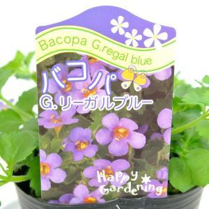 バコパ コピア グレートリーガルブルー 3号ポット 栄養系バコパ 寒さに強い|rose-factory