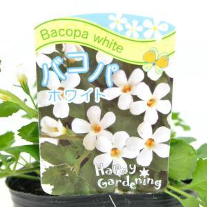 バコパ ホワイト 3号ポット 栄養系バコパ 寒さに強い|rose-factory