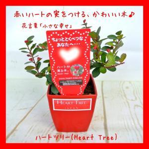 ハートツリー 4号鉢 ハート形のかわいらしい実をつける ハリツルマサキ ギフト プレゼント|rose-factory