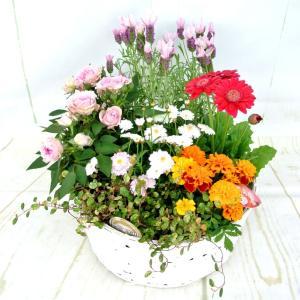 寄せ鉢 季節の寄せ鉢 寄せ植え 寄せかご ギフト お祝 プレゼント 直径30cm 送料無料 ボリュームがすごい rose-factory