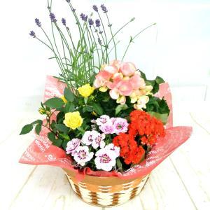 寄せ鉢 寄せ植え 寄せかご(M)ギフト お祝 お誕生日 プレゼント 送料無料 ボリュームがすごい! 豪華  rose-factory