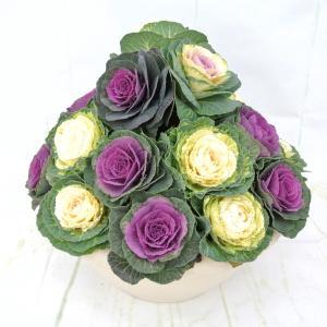 葉ボタン 寄せ植え 3段 丸葉 10号鉢 葉牡丹 豪華な寄せ植え 管理が楽|rose-factory