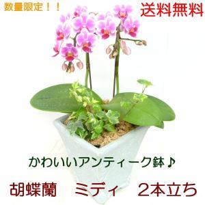 ピコレットチェリーは、鮮やかなピンクのグラデーションが入ったかわいらしい品種です。 小さなお花がたく...