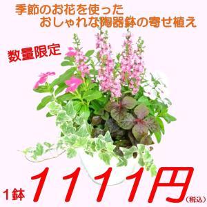 寄せ植え おしゃれな陶器鉢の寄せ植え 季節のお花 お任せ 6号鉢 数量限定の大特価 rose-factory
