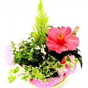季節のかご寄せ 7号 当店おまかせ ●送料無料● rose-factory
