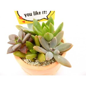 多肉植物 寄せ植え 素焼き鉢 【丸型】 おしゃれな陶器 バンピーポット|rose-factory