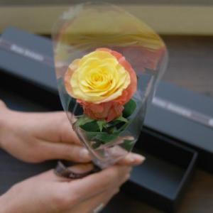 ブラックボックス・薔薇(バラ)のプリザーブドフラワーギフト  新色グラデーション 女性 誕生日|rosegarden|03