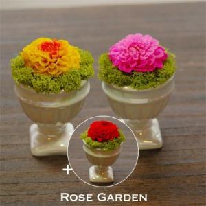 2個買うと1個プレゼント!新商品記念ダリア プレゼント 誕生日|rosegarden
