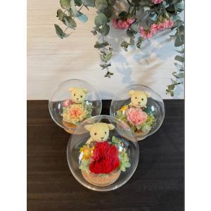 ガラスドーム クマさん カーネーション  rosegarden